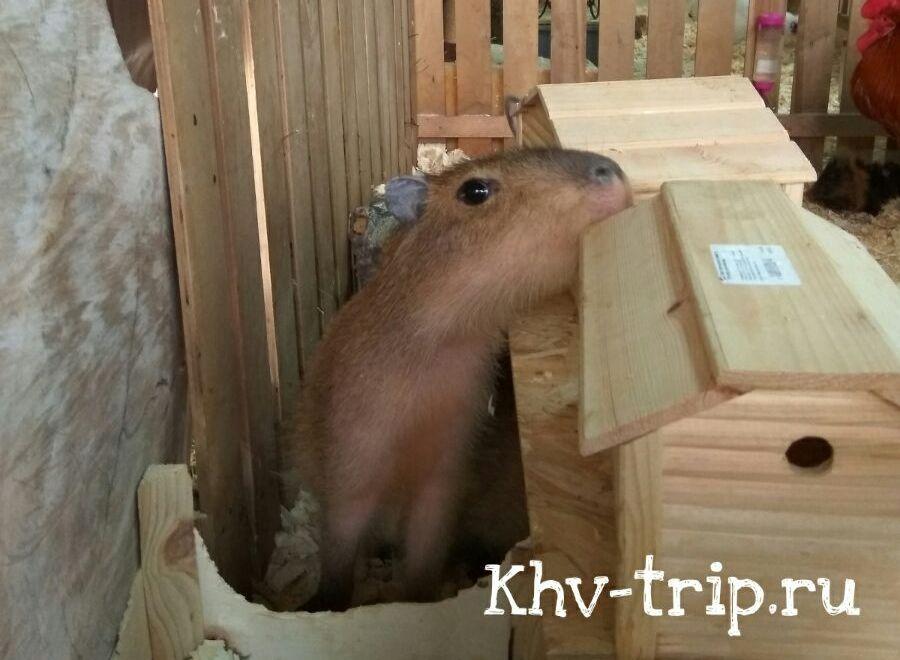 зоопарк Хабаровск