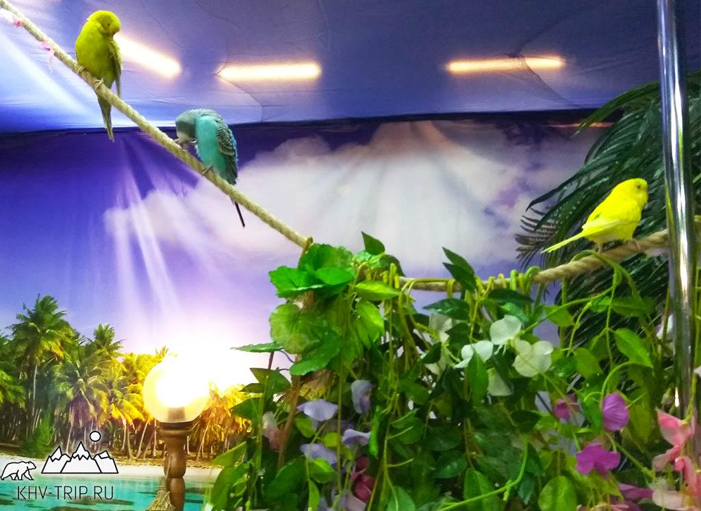 Художественный музей выставка бабочек Хабаровск